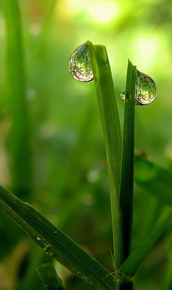 dew drops on grass blades