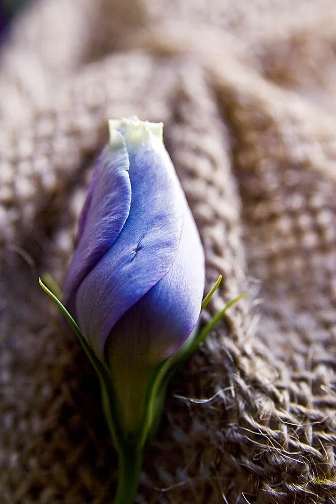 The Flower 2