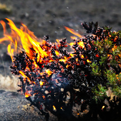 Life Burns!