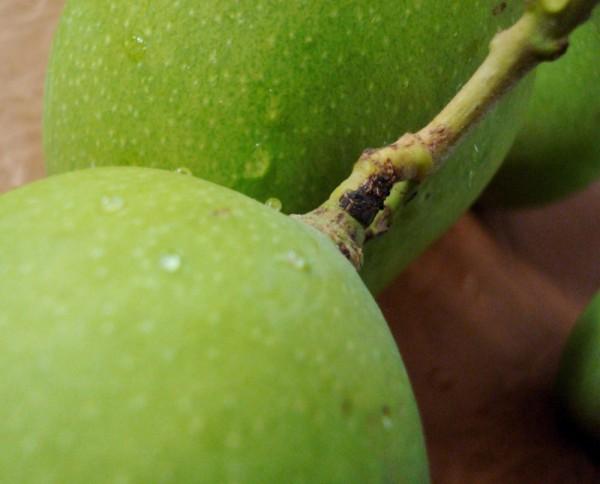 Tender mangoes