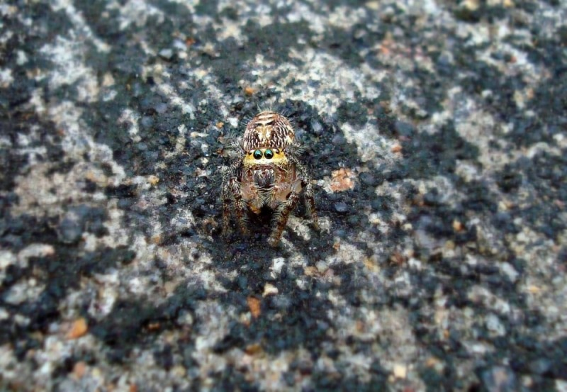 Confused spider
