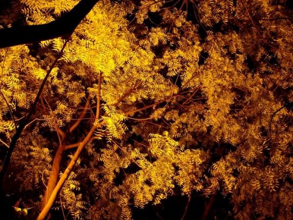 A Lighted Tree