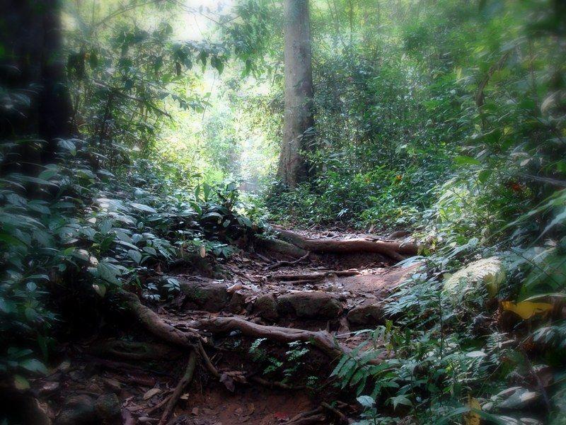 Path through the jungle..
