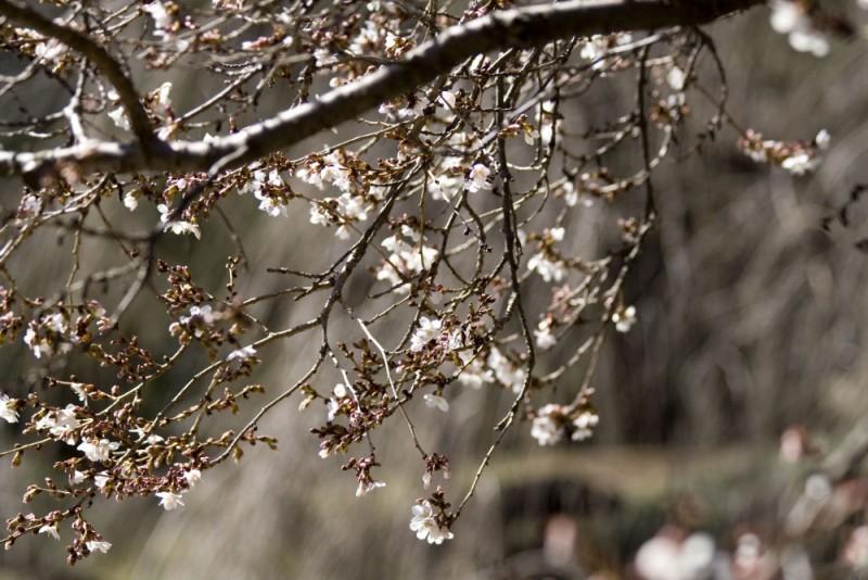 Incipient Spring 3