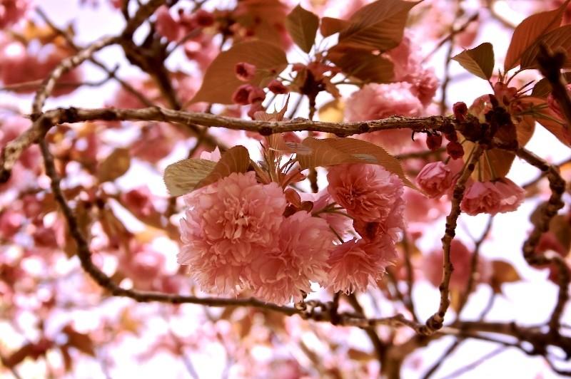 Sprung Spring (at Stanford)