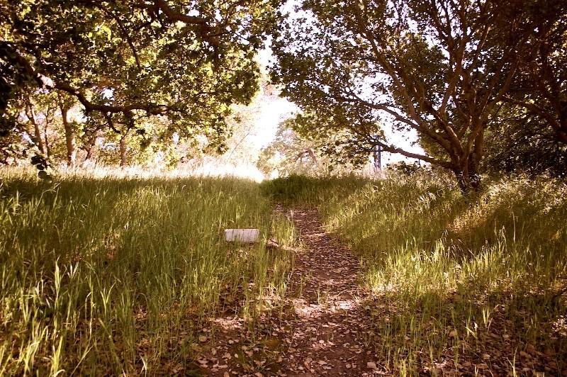Walking Back (at Stanford) II