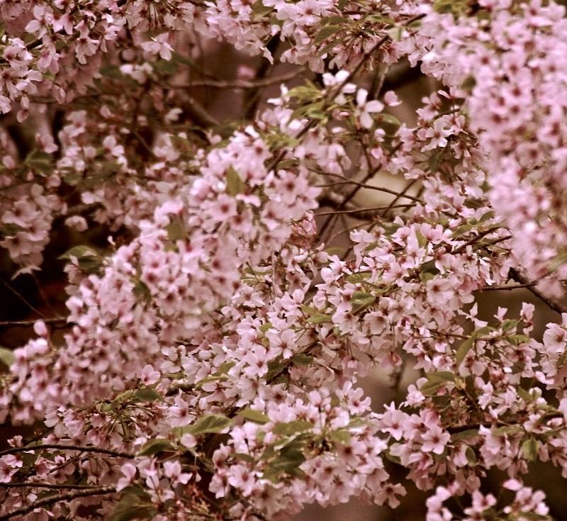 Spring Burst II
