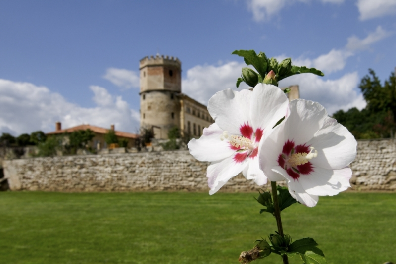 Isere chateau fleur