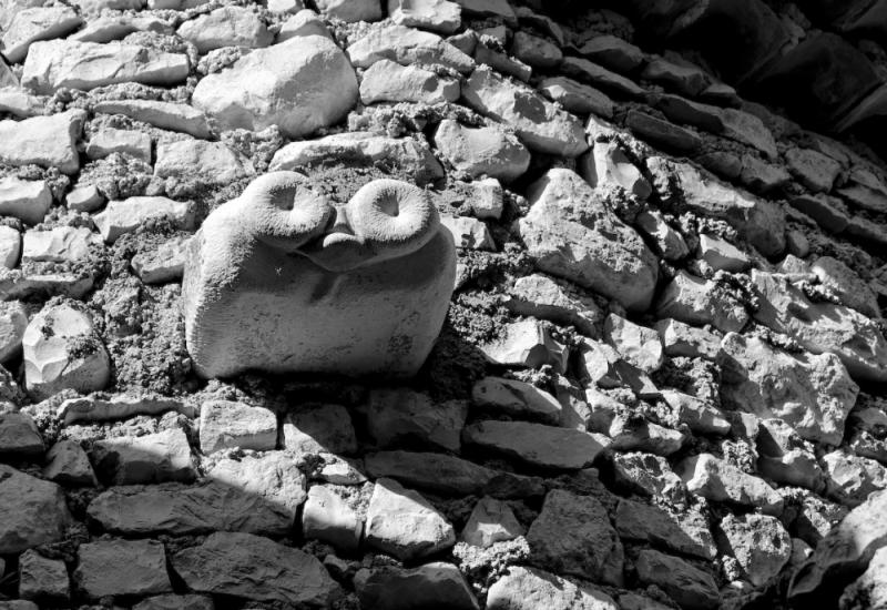 Marsanne Drome mur