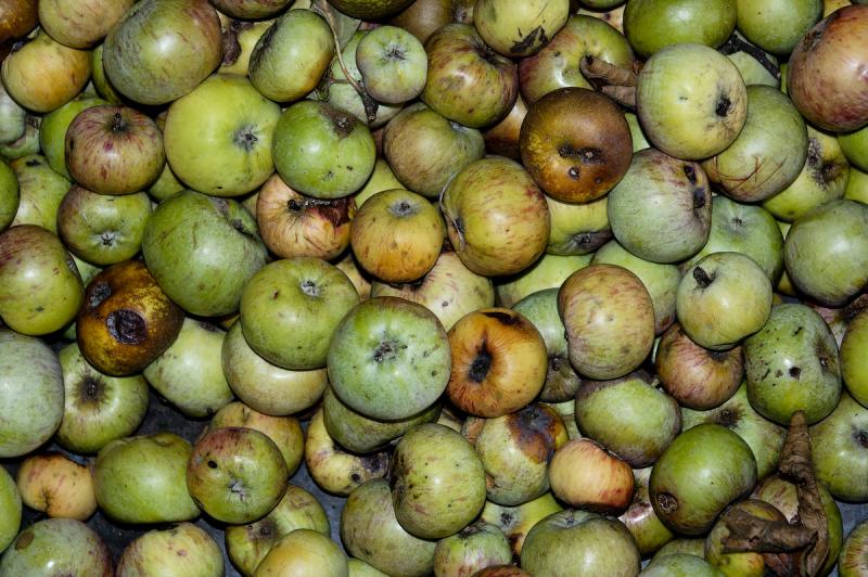 Fruit Pizancon Drome 26