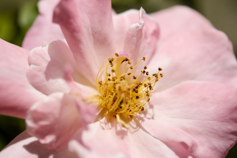 Fleur Macro Pizançon Drome 26