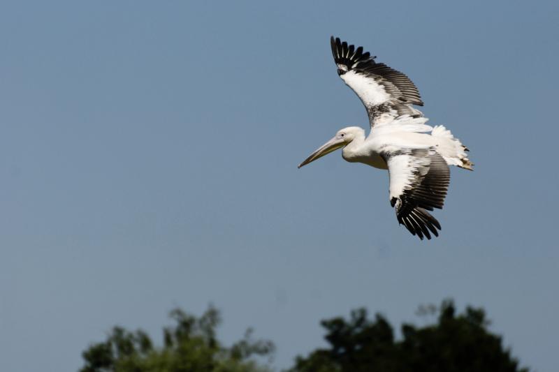 Villard-Les-Dombes oiseau