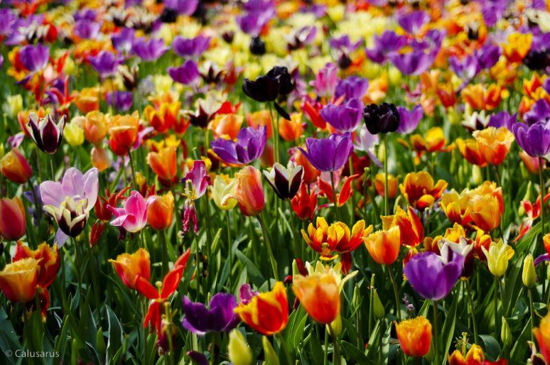 Eden Project St Austell Cornouailles flore