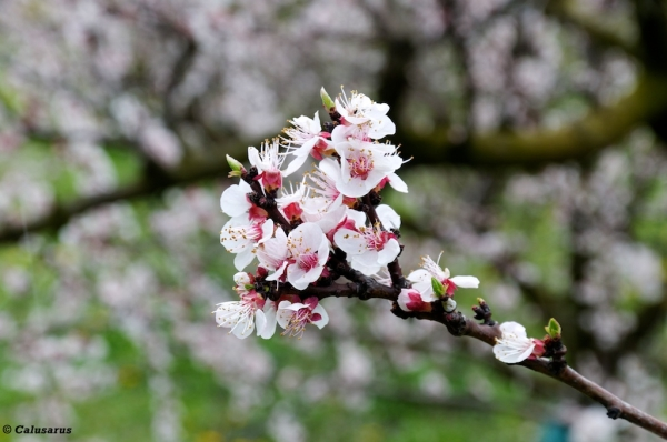printemps fleur drome 26