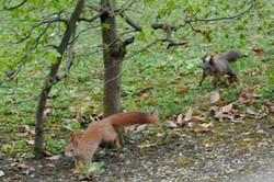 Wien animal Schonbrunn