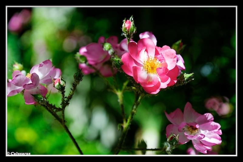 Jardin drome 26 romans-sur-isere