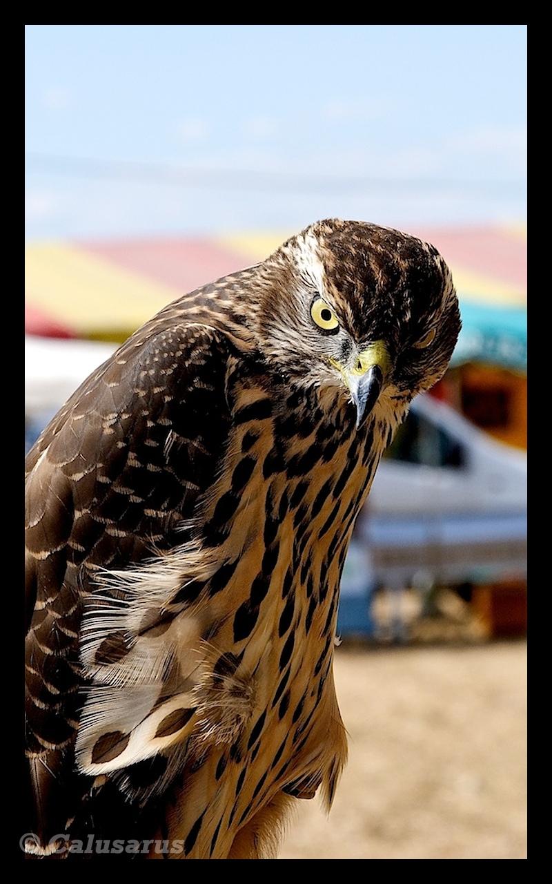 Oiseau Bourg-De-Peage Drome 26