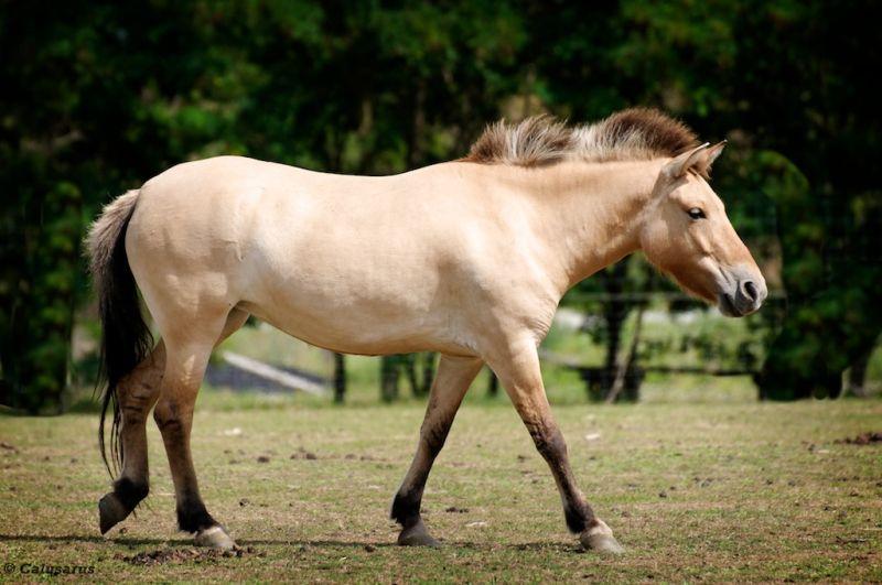 cheval Ardeche