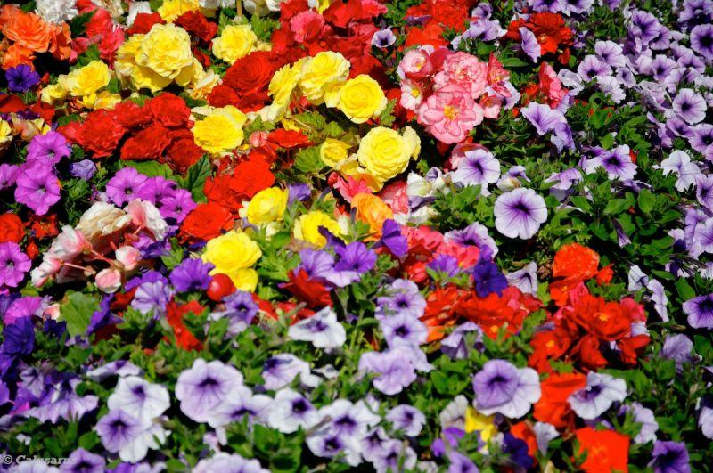 Fleurs Manche