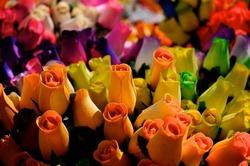 Fleur Drome 26