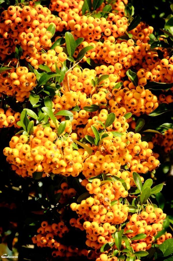 Drome 26 plante