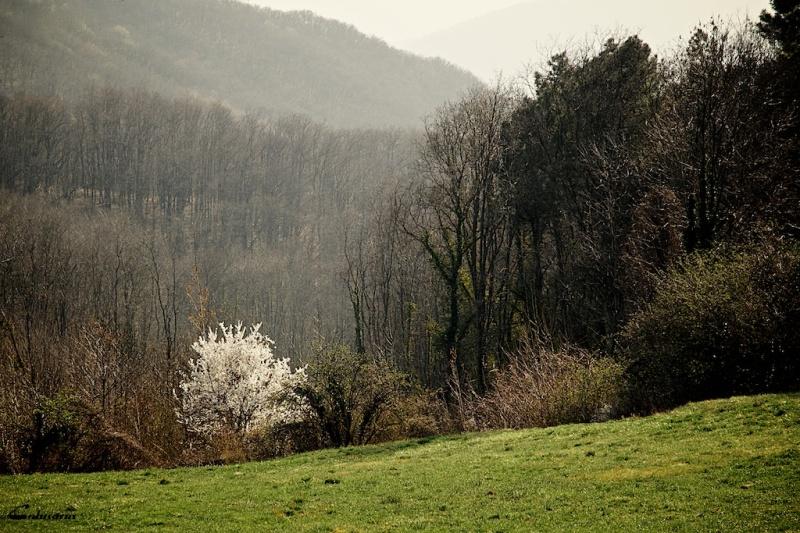 Drome paysage printemps