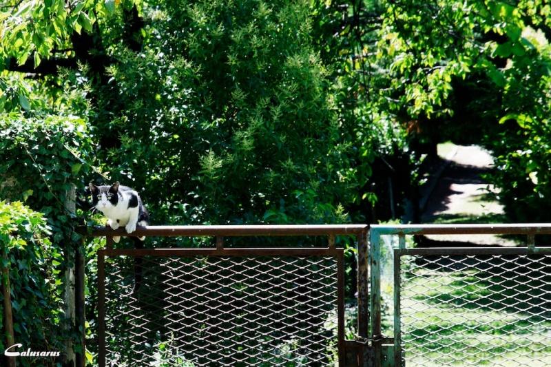 Tain L'Hermitage Drome 26 animal