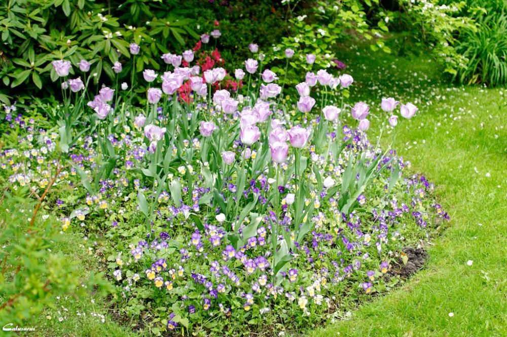 Printemps normandie fleur