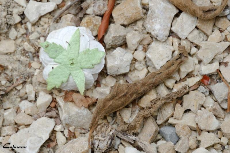 Drome 26 gros plan nature Chantemerle-les-bles