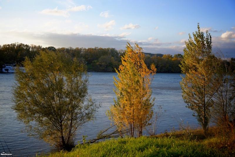Arbre rivière bouches-du-rhone