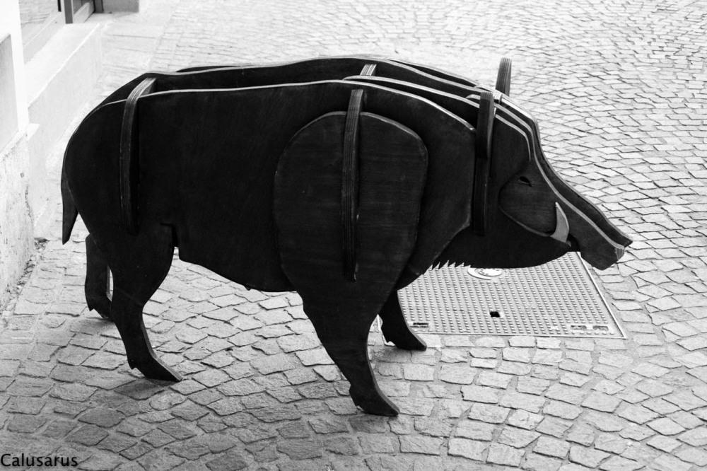 N&B Aix-Les-Bains Savoix animal