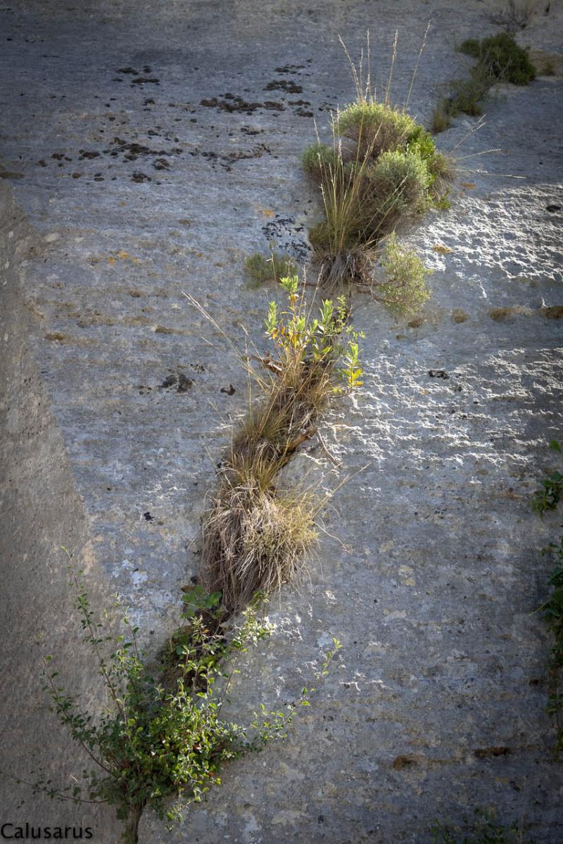 Nature Les-Baux-de-provence