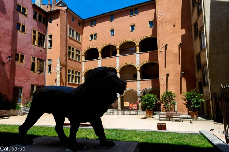 Lyon Lion Ombres