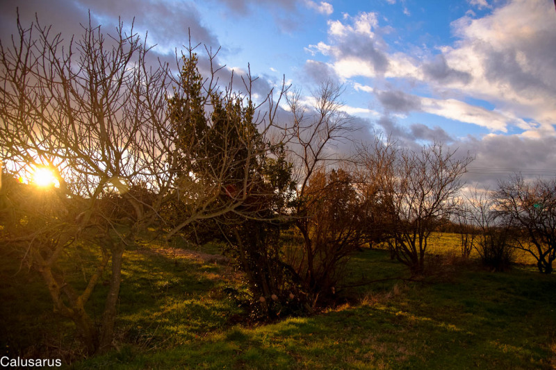 Nature Contre-jour Drome 26 Pizancon