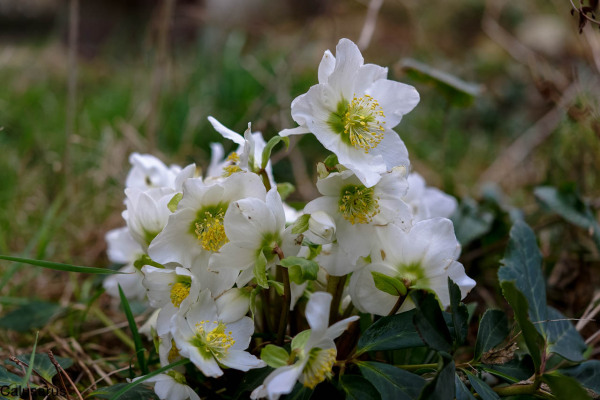 Drome 26 Pizancon fleurs
