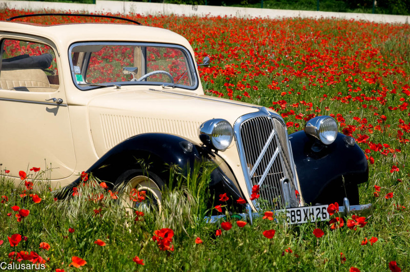 automobile Drome 26 fleur