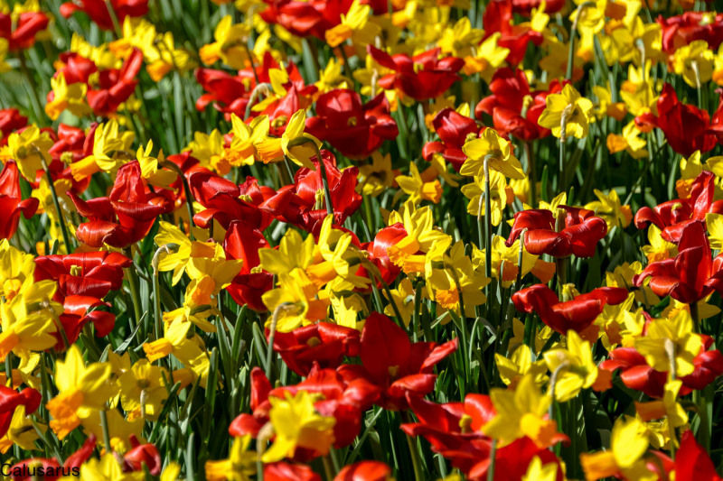 Fleur gros plan jardin pays-bas