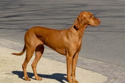 Animal portrait chien Amsterdam
