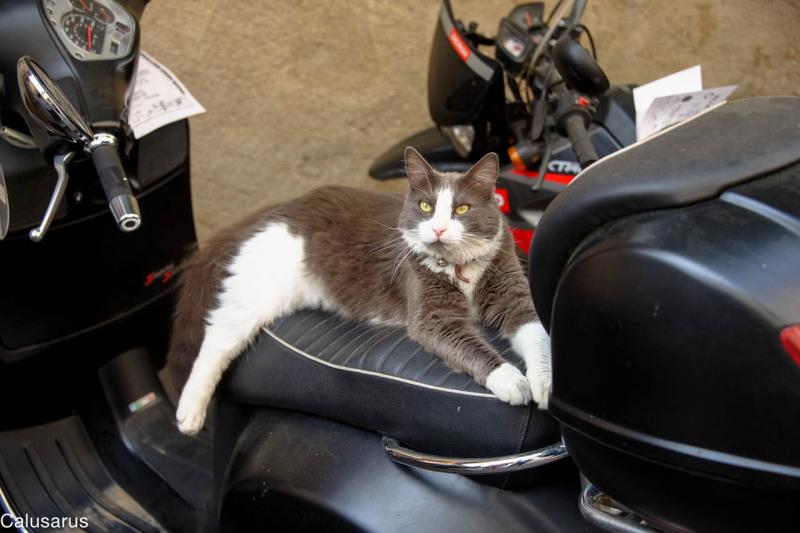 Chat animal moto biot