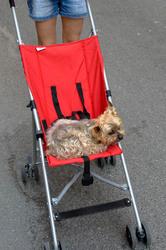 Animal chien Biot