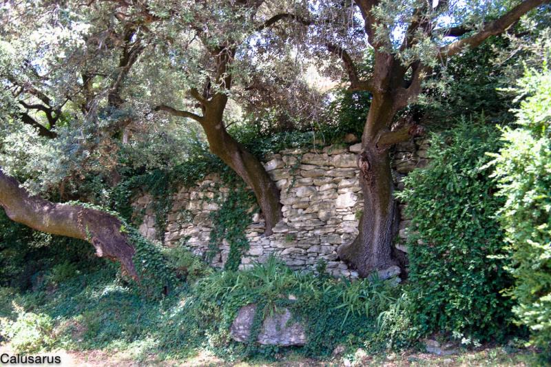 Arbre Nature Drome 26 Montbrison-Sur-Lez