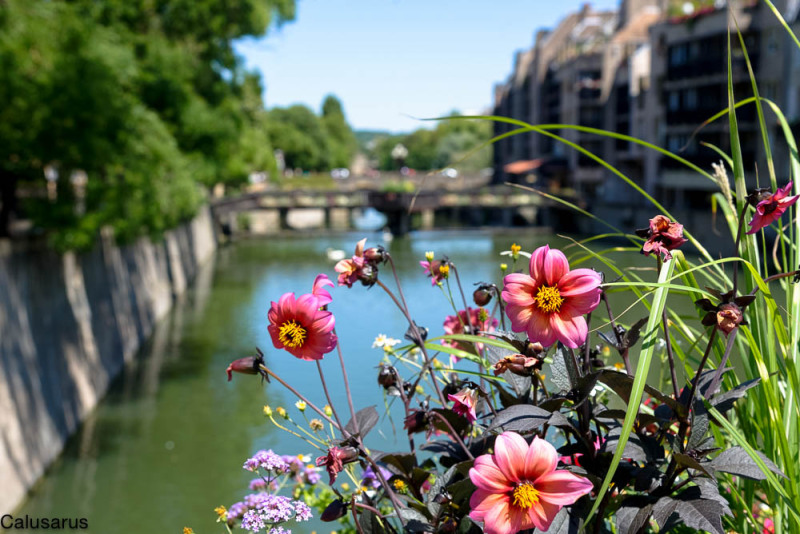 Fleur pont Metz Riviere