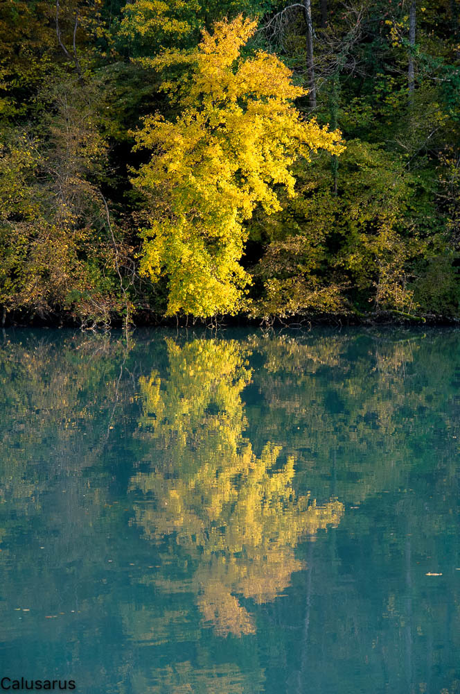 Automne Riviere Arbre Isere