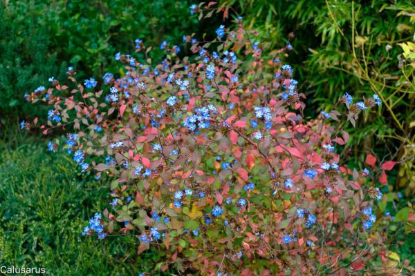 Automne fleur Drome 26 Beaumont-Monteux