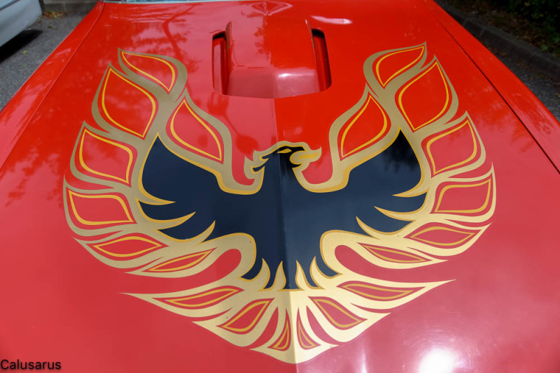 Automobile Oiseau Isere