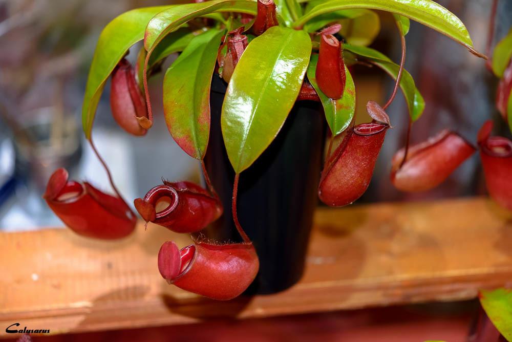 Plante Drome 26 Bourg-de-Peage