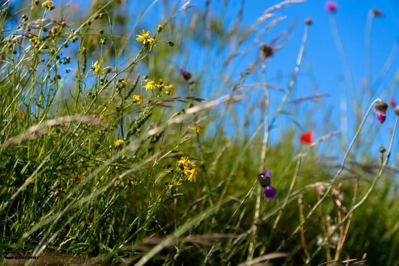 Nature fleur Ardeche