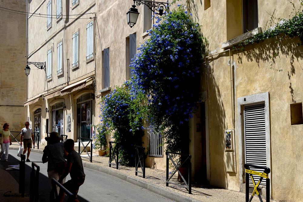 Rue fleur N&B