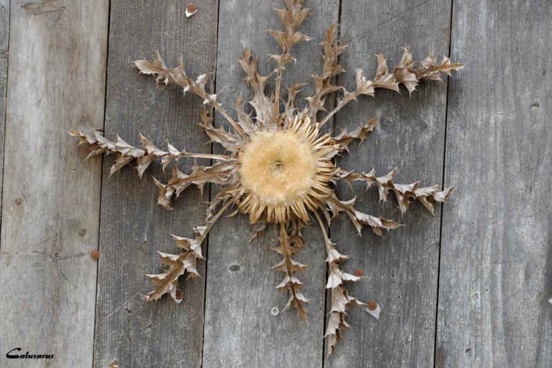 fleur nature morte