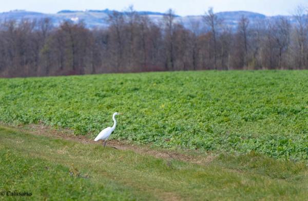 Oiseau drome 26 Portes-les-Valence